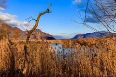 Le vieil arbre (Savoie 01/2019) (gerardcarron) Tags: aixlesbains arbres canon80d ciel cloud eau lacbourget lake landscape morning nature paysage savoie winter
