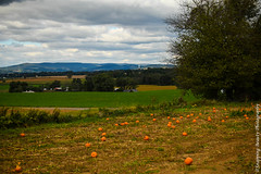 Pumpkin Patch in the Hills (Snapping Beauty) Tags: autumn natural landscape nature inthecountry abstract pumpkin things rural background orange harvest outdoors seasons blue peace terrain beautyinnature countryside stills photography rustic colors green fall farm places scenery