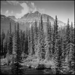 Wilderness (greenschist) Tags: trees ilfordpanf50 vaskar80mmf45 6x6 analog banffnationalpark mediumformat alberta mountains blackwhite canada water voigtllanderperkeoi film clouds