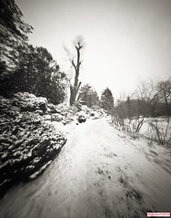 Standing Tall (DelioTO) Tags: 4x5 blackwhite canada d23 f175 fomapan100 garden landscape ontario panoramic pinhole snow toned trails winter woods