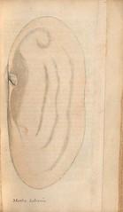 n180_w1150 (BioDivLibrary) Tags: greatbritain mollusks museumsvictoria bhl:page=57640389 dc:identifier=httpsbiodiversitylibraryorgpage57640389 conchologicaldictionary conchology shells britishisles britishislands williamturton british