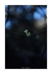2019/1/27 - 12/12 END. photo by shin ikegami. - SONY ILCE‑7M2 / Carl Zeiss C Sonnar T* 1.5/50 ZM (shin ikegami) Tags: asia sony ilce7m2 sonyilce7m2 a7ii 50mm carlzeiss sonnar csonnar50mmf15 tokyo sonycamera photo photographer 単焦点 iso800 ndfilter light shadow 自然 nature 玉ボケ bokeh depthoffield naturephotography art photography japan earth