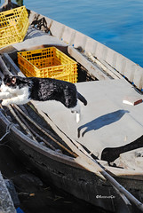 Escape (rossendgricasas) Tags: gat cat boat water photography photo photos nikon
