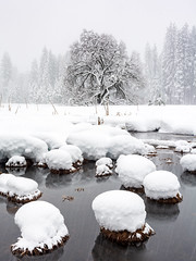 Cook's Meadow, Yosemite_ (Basak Prince Photography) Tags: nationalpark places california cold cookcmeadow ice snow storm trees white winter yosemitenationalpark