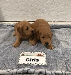 Annie Girls pic 2 3-9