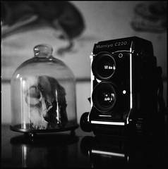 Mamiya C220 TLR (fromfarbeyond) Tags: tänkpådöden stilllife home 120film mediumformat twinlensreflex tlr analog film delta 3200 ilford bw 500cm c220 skull mamiya hasselblad