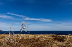 Stark (Karen_Chappell) Tags: landscape blue trees nfld newfoundland grass ocean atlanticcanada atlantic avalonpeninsula eastcoast eastcoasttrail canada canonef24105mmf4lisusm sky clouds seascape sea scenery scenic torbay spring
