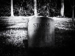 Storm (Feldore) Tags: yorkshire thorp perrow pet cemetery storm gravestone england graveyard feldore mchugh em1 olympus 1240mm headstone