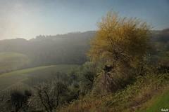 IMG_4586 Campagna toscana (Betti52) Tags: montespertoli firenze italia campagna natura post07042019