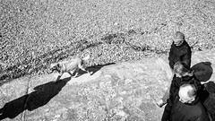 Moment Ephémère / Ephemeral Moment (Napafloma-Photographe) Tags: 2019 artetculture bandw bw fr france géographie kodak kodaktrix400 landscape letréport métiersetpersonnages natureetpaysages normandie objetselémentsettextures paysages personnes seinemaritime techniquephoto animaux beach blackandwhite chien monochrome napaflomaphotographe noiretblanc noiretblancfrance ombre pellicules photoderue photographe photographie plage province streetphoto streetphotography
