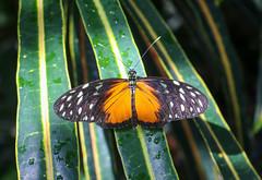 Vacances_0862 (Joanbrebo) Tags: mainau konstanz badenwürttemberg de deutschland canoneos80d eosd autofocus papallona papillon butterfly mariposa farfalle contactgroups