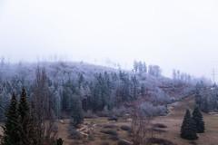 Violet (endriuthomas) Tags: violet trees wood albstadt germany germania deutchland snow neve