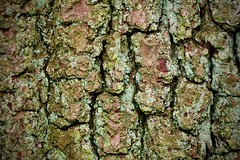 bark (rwbthatisme) Tags: bark