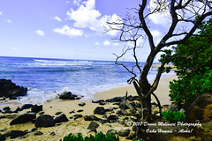 OAHU-HAWAII_1A53972-01 (Donna Molinari Photography) Tags: sanjose ca usa