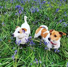 Thu, Jan 10th, 2019 Lost Male Dog - An Tsráid Mhór, Achadh An Iúir, Cavan (Lost and Found Pets Ireland) Tags: lostdogantsráidmhórcavan lost dog an tsráid mhór cavan january 2019