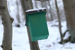 Dumm gelaufen! :-) (Klaus R. aus O.) Tags: ber flughafen berlin peinlich unfall vogelhaus wald baum erholung lustig