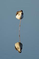 L'unijambiste pas content ! (Elisabeth Lys) Tags: chevalier oiseau maraissalants guérande marais nikon d7200 sigma 150600mm