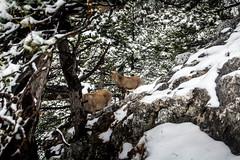 0094_DSC_2681 (marcellszmandray) Tags: ausztria hohewand gutensteinialpok alpok viaferrata kirándulás tavasz hó