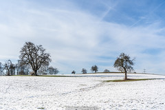Winter Trees in February 2019 II (boettcher.photography) Tags: tree baum trees bäume schnee snow februar february winter 2019 dilsberg neckargemünd rheinneckarkreis kurpfalz badenwürttemberg deutschland germany sashahasha boettcherphotography boettcherphotos sky himmel wolken clouds natut nature naturfotografie landschaft landscape