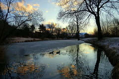 Variations of morning (tatranka7) Tags: landscape pond mirror reflections animals trees water atmosphere morning sunrise sky clouds ice colors