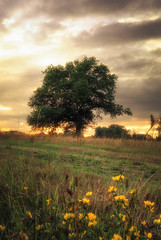 Summer Tree (Jan Staes) Tags: summer tree flowers sunset cloudy mood belgium jan staes nature landscape