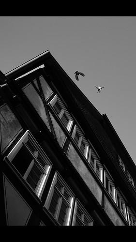 Die Tauben von Marburg