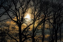 Incoming.... (Joe Hengel) Tags: incoming milton miltonde delaware de sussexcounty trees treebranch tree treebranches branches silhouette silhouettes sunset sun sunlight watchingthesunset clouds sky