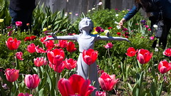 Little girl sunshine sculpture in the tulip garden of the bulb guy (jamestapatio) Tags: thebulbguycom bulbguy bulb tulip