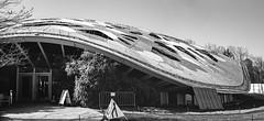 Kaeng Krachan Elefantenpark (schoeband) Tags: canonetgiiiql17 rolleiretro80s bw film 35mm caffenolc homebrewed zoo zurich zürich schweiz suisse svizzera svizra switzerland architecture architektur