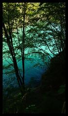 Shades of wild nature (Agnes_U) Tags: lago molveno italia italy shades acqua water sfumature estate turchese azzurro silhouettes alberi bosco trees
