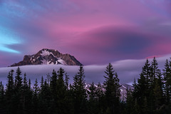 Purple Details (kephart_kyle) Tags: adventure beautiful hood landscape national oregon park rainier sunset travel trip washington