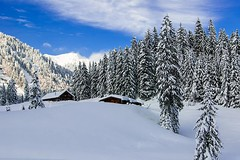 Schwarze Tenn Alm (helluvastar.on.the.way) Tags: bayern bavaria snow schne blauer himmel schnee hütten huts trees upper oberbayern kreuth tegernsee