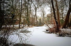 Winter Trees (Clare-White) Tags: winter snow park amsterdam nature trees
