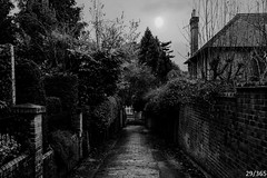 Up the Alley (Jamie Medford) Tags: 2019 alleyway bricks bushes footpath january kent path town trees tunbridgewells