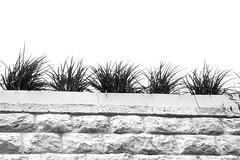Roof Flowers (zeevveez) Tags: זאבברקן zeevveez zeevbarkan canon bw flower roofs