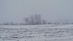 Trees in Winter (joeldinda) Tags: 4466 2019 cloud em1 em1ii eatoncounty february fields gray graysky grey greysky michigan omd omdem1mkii olympus roxana roxandtownship sky snow tree weather winter