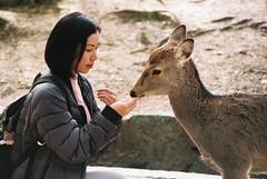 A Princess Moment (GingerKimchi) Tags: nara osaka japan travel nature asia film 35mm fujifilm canon deer canona1 2019 spring february march