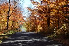 Couleur d'automne  MG_0526 (Paul_Paradis) Tags: landscape paysage tree arbre automne fall ciel foret nature natutal canada quebec iledorleans route