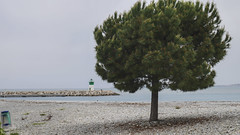 Beach in Saint Laurent du Var, France 5/5 2015. (photoola) Tags: saintlaurentduvar fyr strand beach france photoola tree