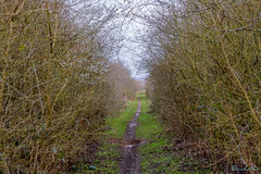 Marton Disused Railway 18th March 2019 (boddle (Steve Hart)) Tags: stevestevenhartcoventryunitedkingdomcanon5d4 marton disused railway 18th march 2019 steve hart boddle steven bruce wyke road wyken coventry united kingdon england great britain wild wilds wildlife life nature natural bird birds flowers flower fungii fungus insect insects spiders butterfly moth butterflies moths creepy crawley winter spring summer autumn seasons sunset weather sun sky cloud clouds panoramic landscape royalleamingtonspa unitedkingdom gb canon 5d mk4 100400mm is usm ii