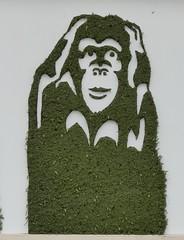 Mister Ride - Ne pas entendre (Thethe35400) Tags: artderue arteurbano arturbain arturbà arteurbana calle fresque grafit grafite grafiti graffiti graffitis graff mural murales muralisme plantilla pochoir stencil streetart schablone stampino tag urbanart wall végétal vegetal green singe singes monkeys