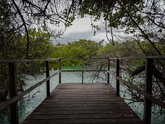 Laguna las Ninfas (dcdc887) Tags: ecuador galapagos camino sendero track trail path lago laguna lake lagoon water agua manglar mangrove deck lookout mirador muelle