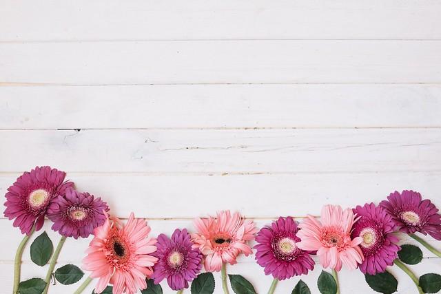 Обои листья, цветы, герберы картинки на рабочий стол, раздел цветы - скачать