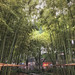 bamboo park, Old City, shanghai,  China