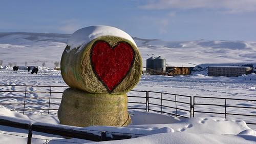 Valentines Day Hay Bale #2