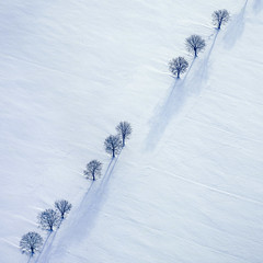 Trees In A Row - 16 (Aerial Photography) Tags: by ei obb 14011995 950040 baum baumreihe bavaria bayern bäume deutschland diagonale farbe fotoklausleidorfwwwleidorfde fotoklausleidorfwwwleidorfaerialcom germany grafik landscapeandnature landschaft landschaftnatur laubbaum luftaufnahme luftbild p1 region schnee schwarz stadelhofen stimmung titting weis winter aerial black color colour deciduoustree diagonal foliagetree graphicart graphics landscape landscapenature leaftree lineoftrees mood nature negro outdoor rowoftrees snow tree trees white tittinglkreichstätt bayernbavaria deutschlandgermany deu