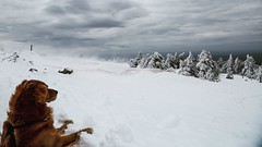 Wie der Sehhund den Schnee sieht... (lichtflow.de) Tags: weite gipfel hund brocken spaziergang kontrast unwetter hills berge harz dog outdoor nature natur winter storm sturm schnee snow canon