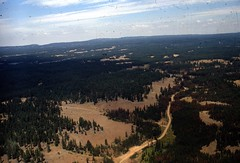 1969. Aerial view of mountain pine beetle damage in lodgepole pine. French Corral, Umatilla National Forest, Oregon. (USDA Forest Service) Tags: usda usfs forestservice foresthealthprotection stateandprivateforestry region6 r6 divisionoftimbermanagement pacificnorthwestregion insectanddiseasecontrol forestinsect foresthealth forestprotection forestentomology pnw frenchcorral umatillanationalforest oregon mountainpinebeetle lodgepolepine 1969 insectdamage aerialphoto aerialphotography lowelevation oblique barkbeetle damage treedamage treemortality deadtrees aerialsurvey aerialdetectionsurvey