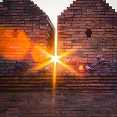 Sunbursts through Chiang Mai Old City Wall (Mat Mayer) Tags: sunburts sunbeams wall pigeons chiangmai jupiter50mm jupiter8