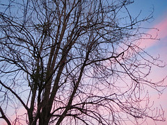 Tree And Colorful Sky. (dccradio) Tags: lumberton nc northcarolina robesoncounty outdoor outdoors outside nature natural march spring springtime tuesday tuesdayevening evening goodevening tree trees treebranch treebranches branch branches pinksky sky bluesky treelimb treelimbs scenic beauty pretty beautiful canon powershot elph 520hs